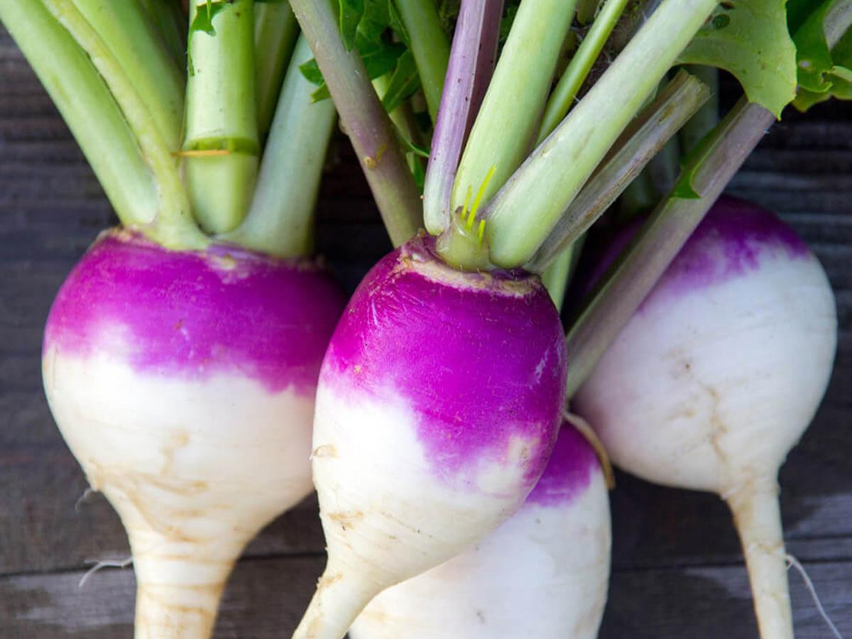 Purple Top Turnip Seed